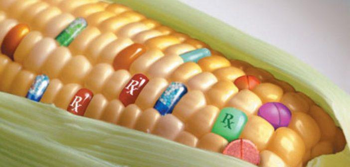 OGM : la culture du profit